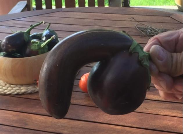 körte alakú pénisz