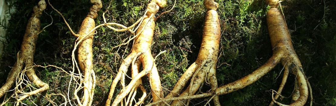 hogyan lehet javítani az erekciót gyógynövényekkel