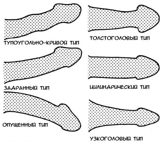 a pénisz deformációja az erekció során)