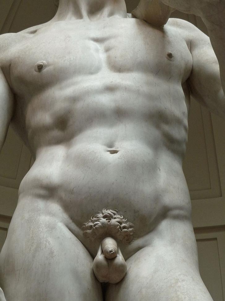 a pénisz izom vagy sem