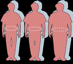 befolyásolja-e a súly a pénisz méretét