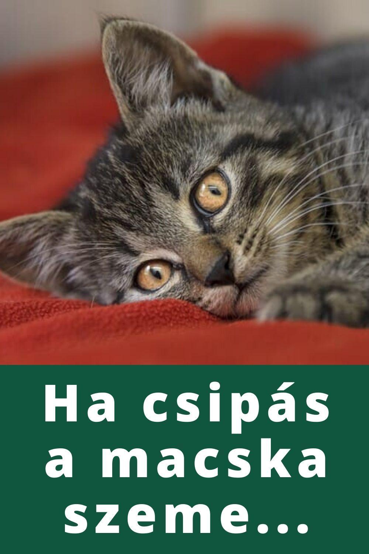 a cicának merevedése van)