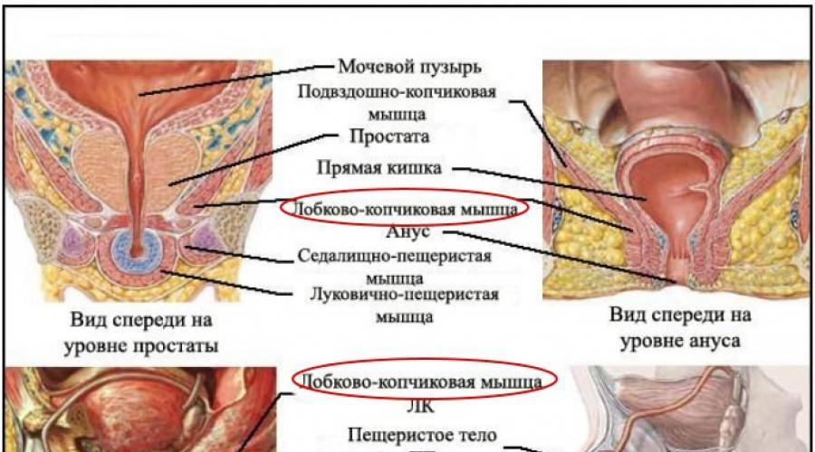 az erekció erősítése és meghosszabbítása)