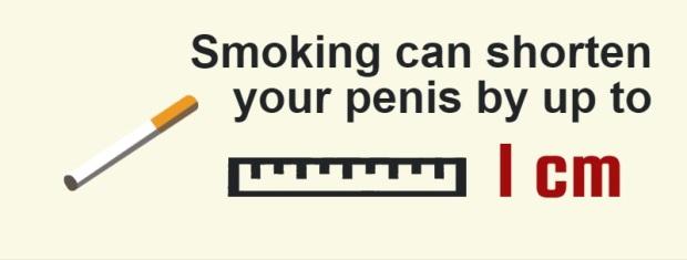 egészség a péniszről)