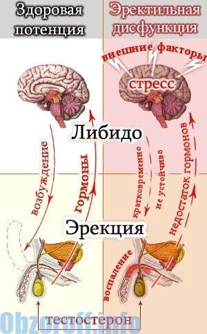 a varicocele befolyásolja az erekciót)