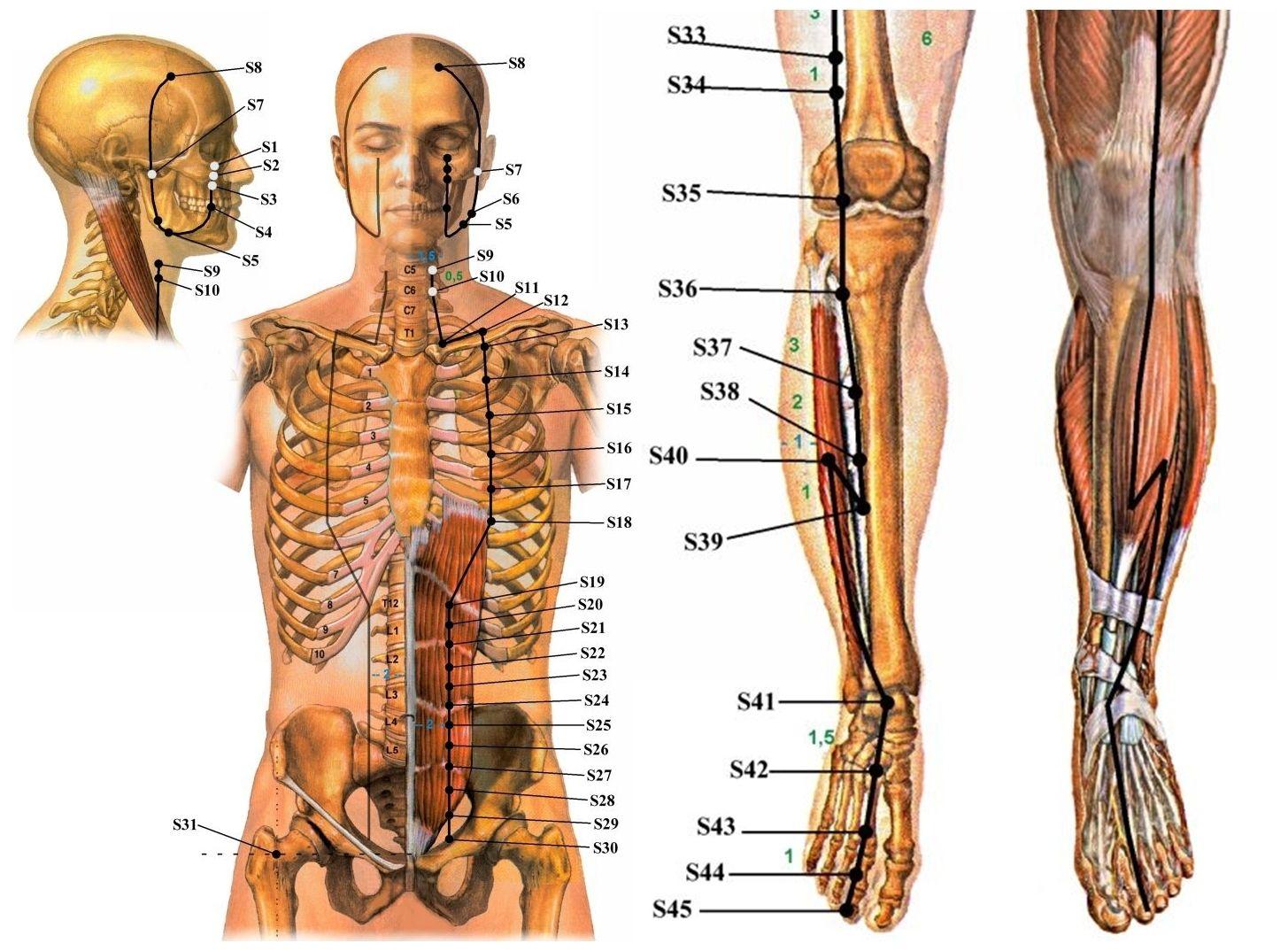 akupunktúrás erekciós pont