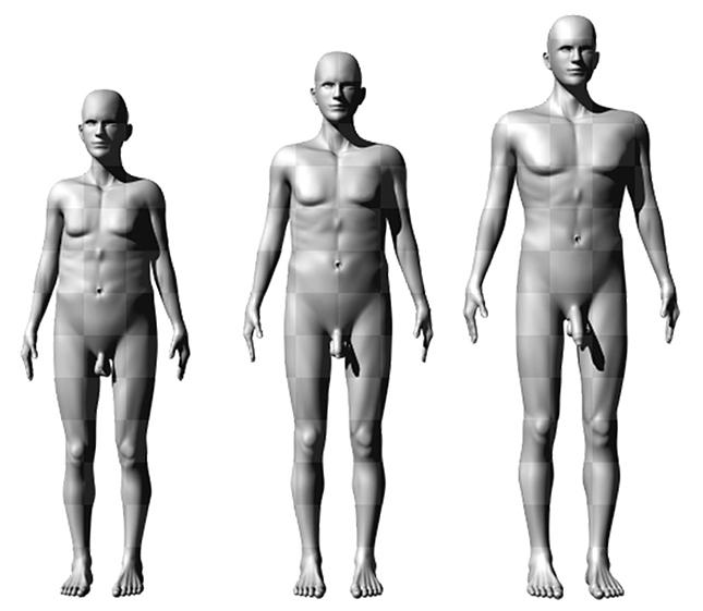 a hím pénisz nagysága és alakja