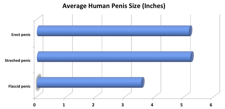 befolyásolja-e a súly a pénisz méretét)