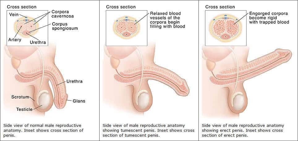 az erekciós kezelés hiánya)