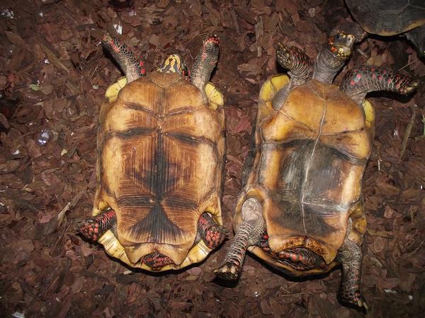 Zavarba ejtő nemi életet él egy apró rovarfaj