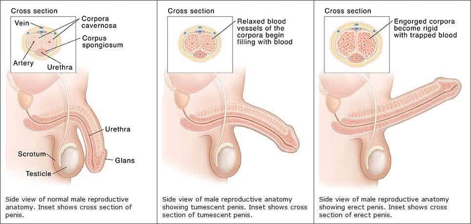 csökkent erekciós kezelés)