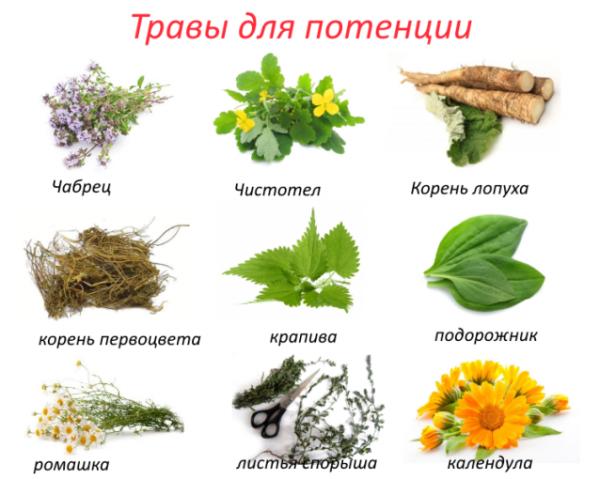 kvass és erekció)