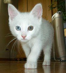 Miért sírnak a macskák? - Napi Vagányság