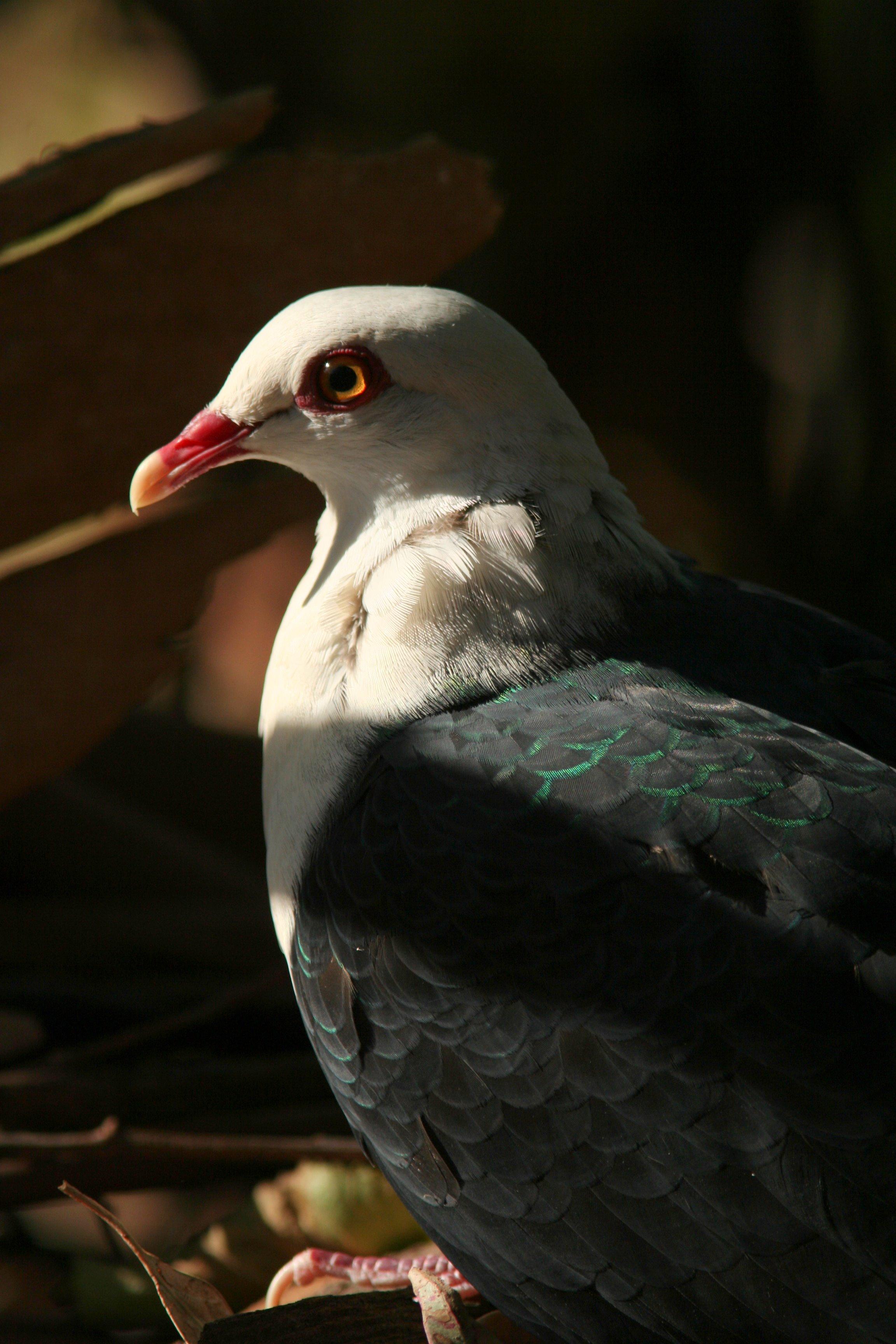 Nyelv és Tudomány- Főoldal - Őrülten szexelő állatok – újratöltve