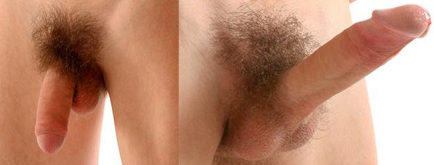 férfi nemi szerv az erekcióban)