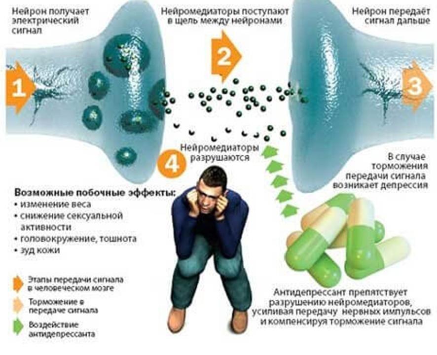 erekciós fenotropil)