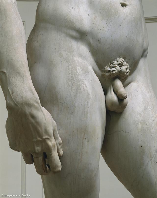 alakja és mérete a hím péniszek
