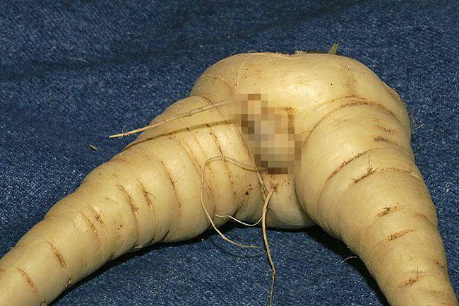 sárgarépa alakú pénisz)