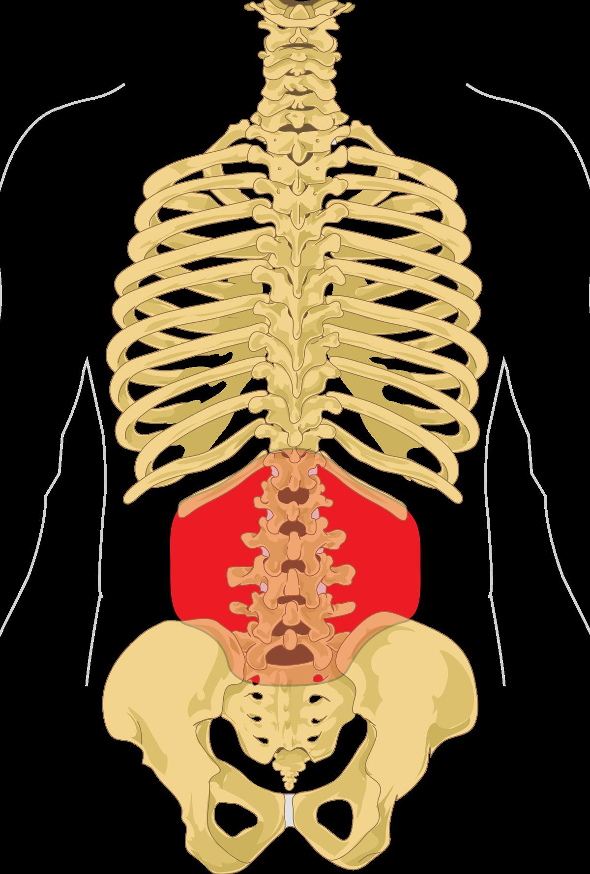 erekció után jelentkező fájdalom a has alsó részén)