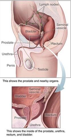 merevedés jelentkezik-e a prosztata masszázzsal az erekció gyorsan elmúlik, mit kell tenni