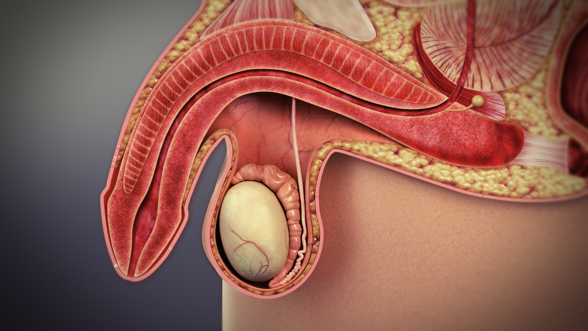 Prosztata gyulladása állhat a háttérben? - Urológiai megbetegedések